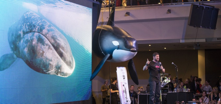 WhaleFest is back!