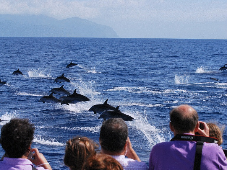 Photo: Miranda van der Linde / Futurismo Whale Watching