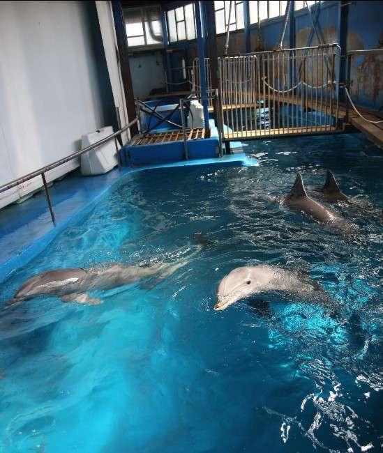 World Cetacean Alliance Adeu Delfinari