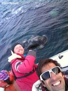 Whale Selfie 2 - Copyright Kevin Bennett