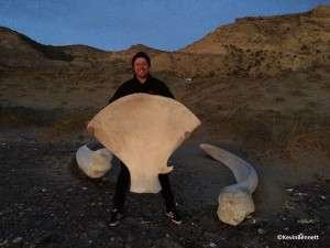 Whale Bone - Copyright Kevin Bennett