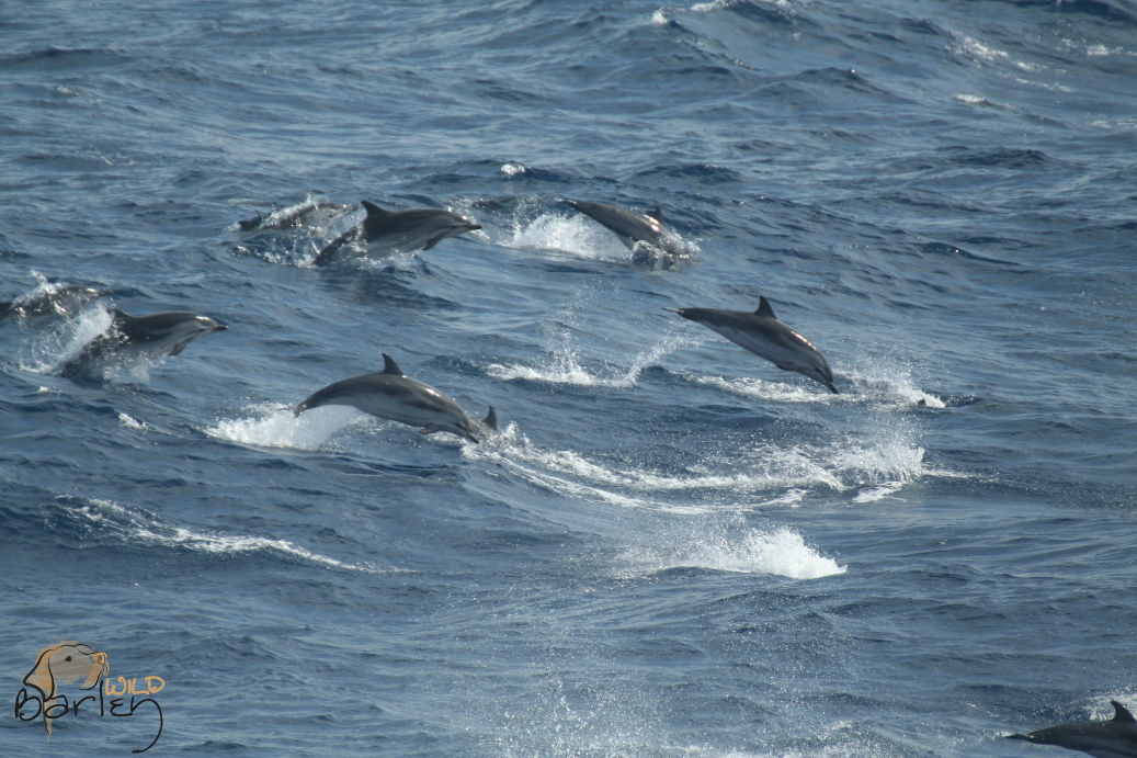 Whale Watch Guide Course