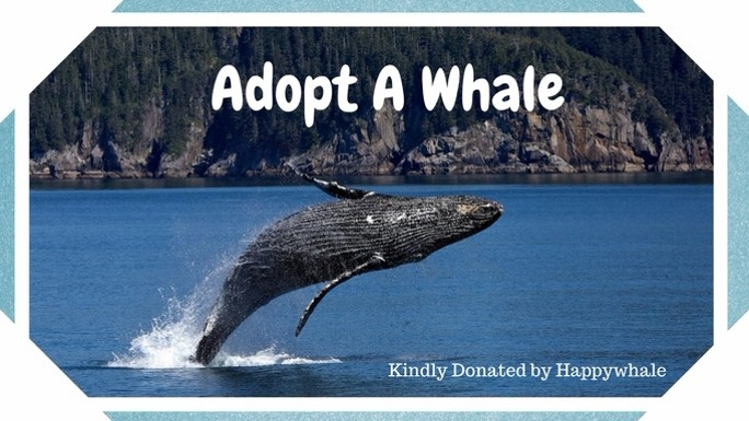 Adopt a whale Happywhale