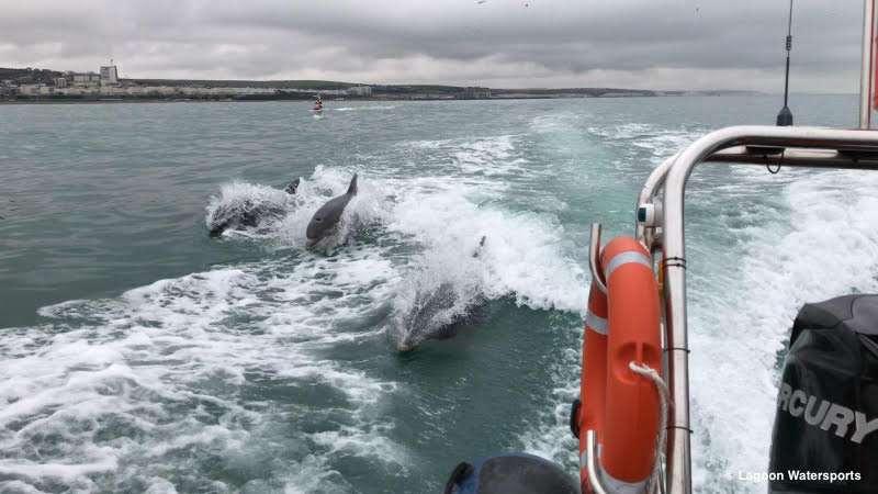 brighton dolphins