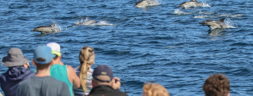 © Aukland Whale & Dolphin Safari