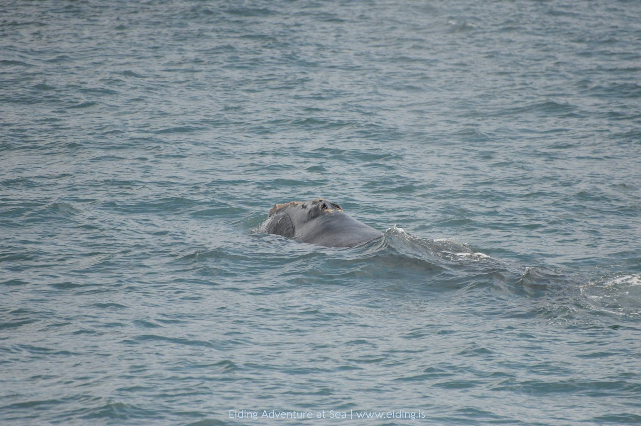 Photo: Elding Whale Watching Reykjavik / Guðlaugur Ottesen Karlsson