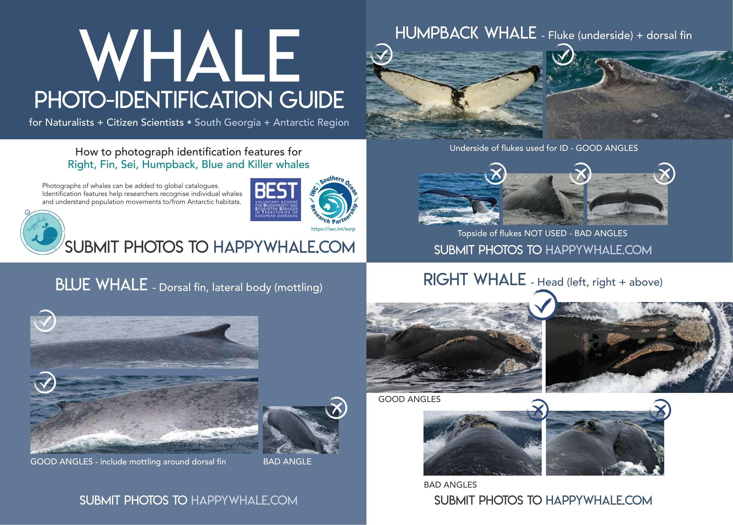 WhalePlacard_PDFFinal-sm-1