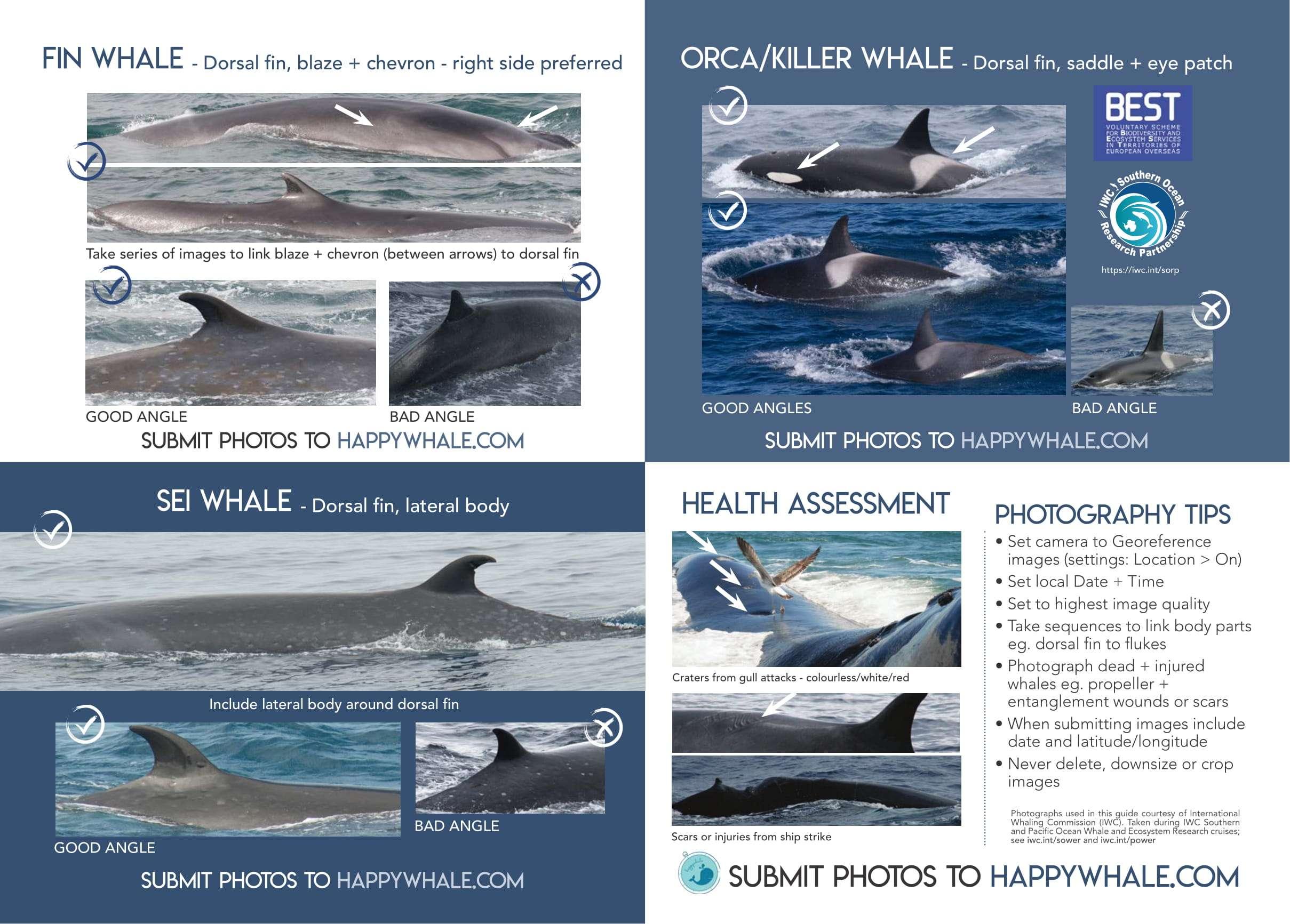 WhalePlacard_PDFFinal-sm-2