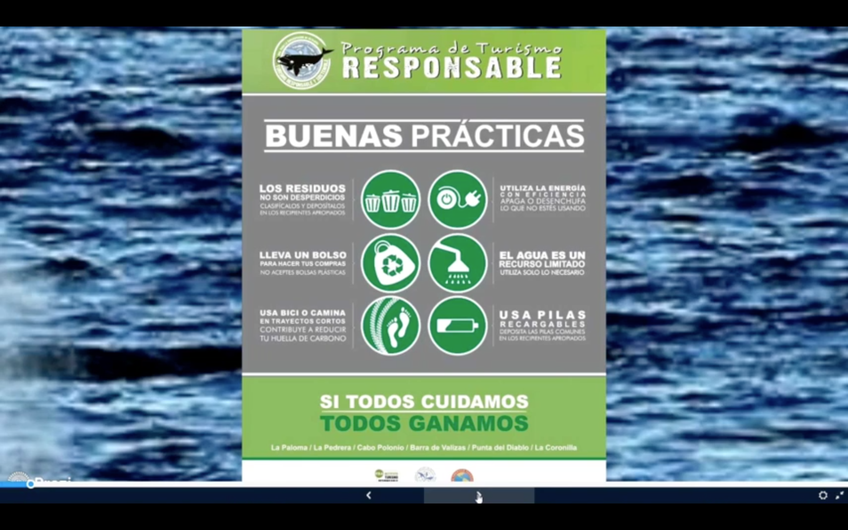 WCA Partner Org, Conservacion De Cetáceos discuss best practice when whale watching in Uruguay during their Focus Day Webinar