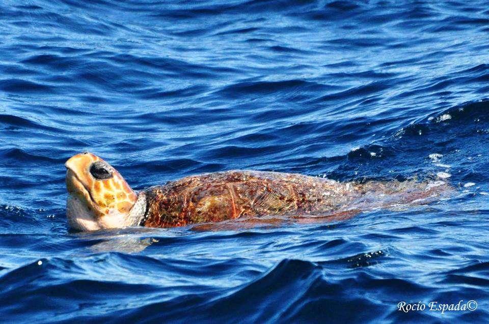 Turtle_Gibraltar_DolphinAdventureGibraltar_01