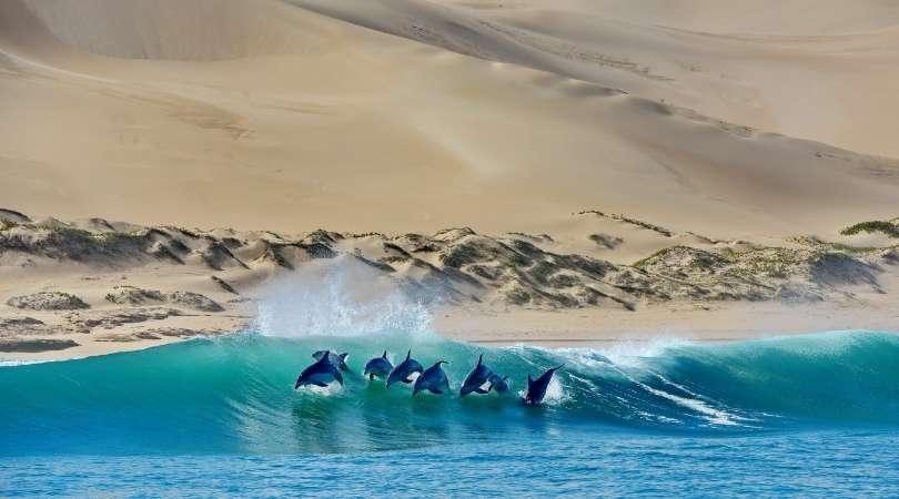 Why Cetaceans?