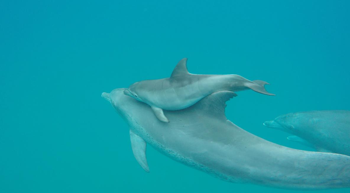 Dolphin Encountours