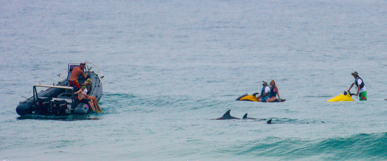 boat, jetski dolphins 111209_