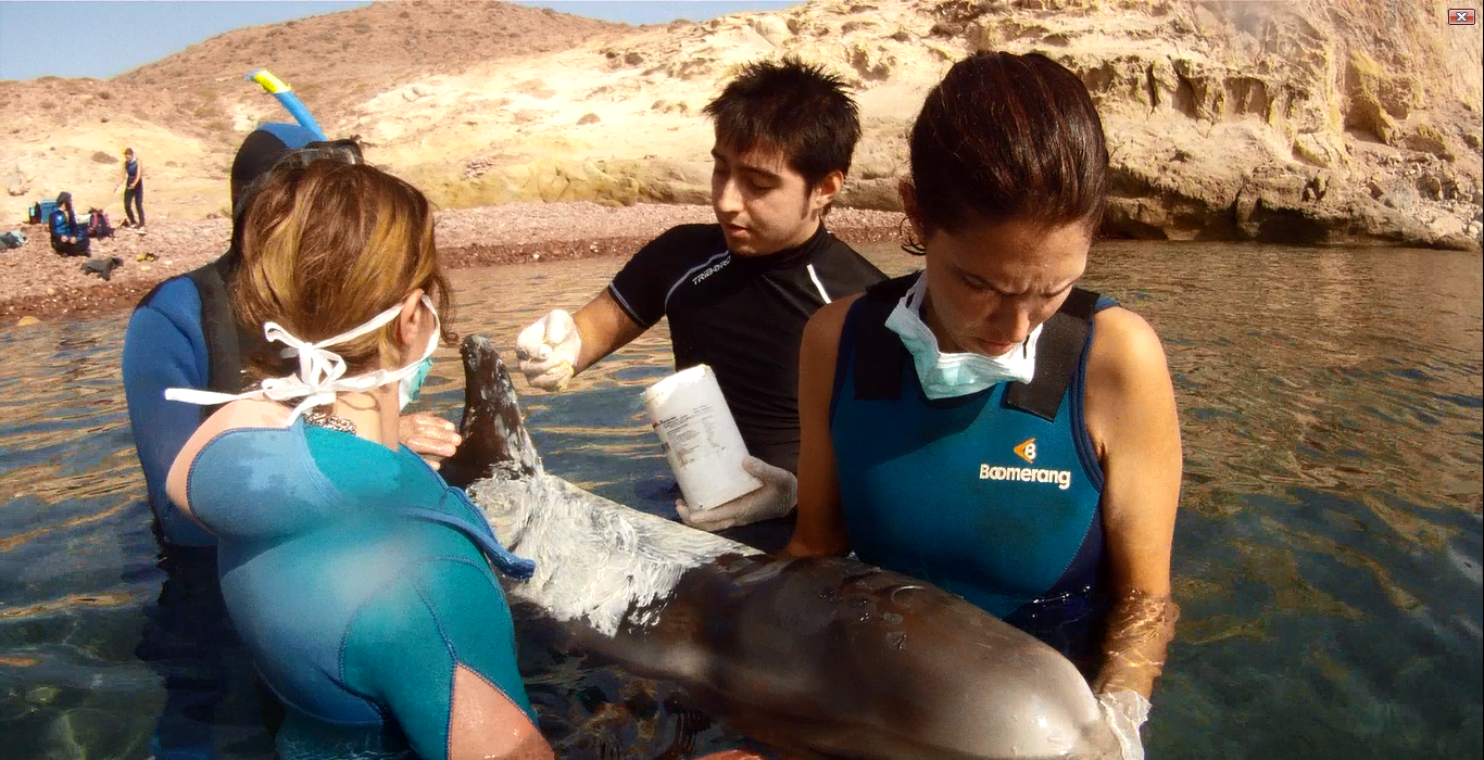 Photo: Rescuing an injured dolphin. Alex Sanchez / Equinac