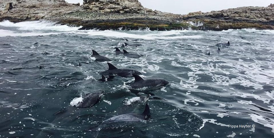 Photograph by pippa hayter, dolphins, wca intern