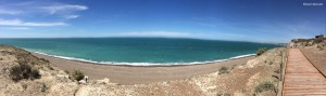 Panoramic Elephant Seal Beach - Copyright Kevin Bennett