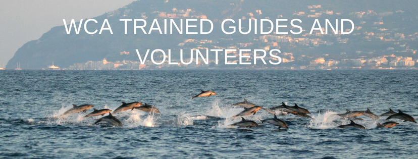 responsible whale watching guides and volunteers (2)
