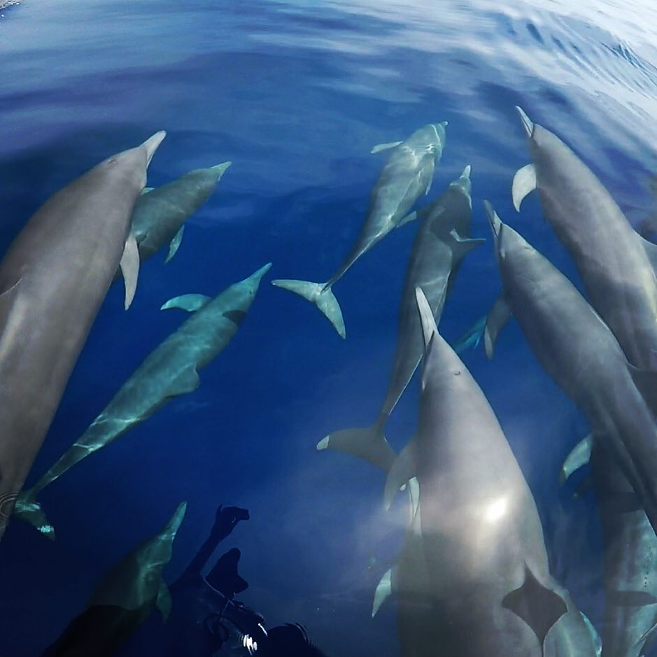 Photo: Dolphins observed swimming Wild and Free. WCA Partner DIvine Dolphin