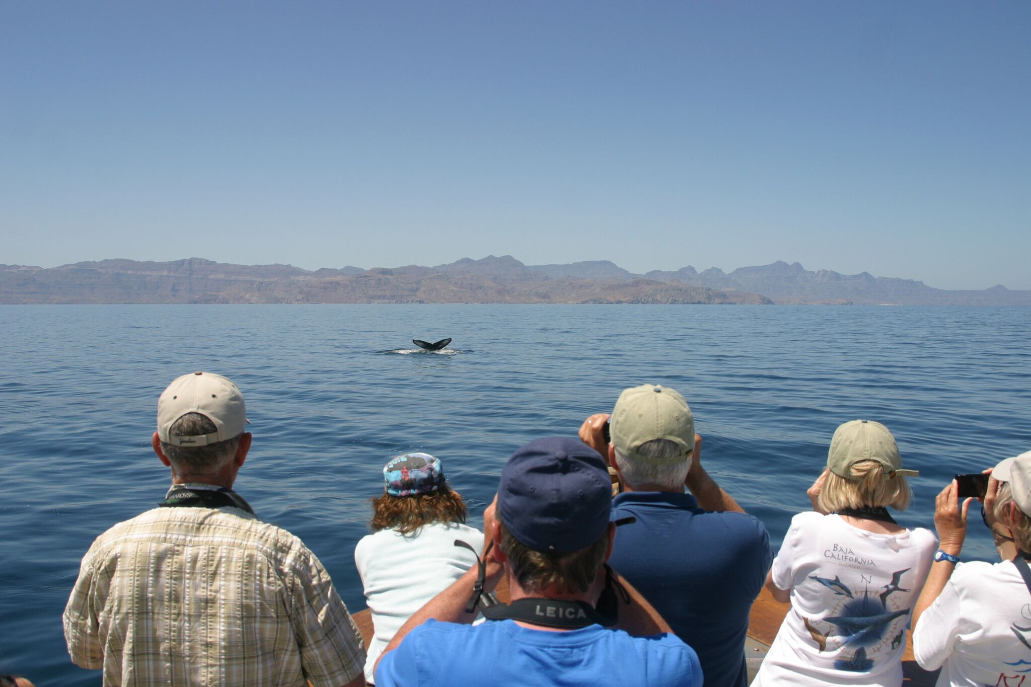 A humpback whale shows its unique fluke patterns to a group of tourists off the Baja California Peninsula, Mexico © Dylan Walker