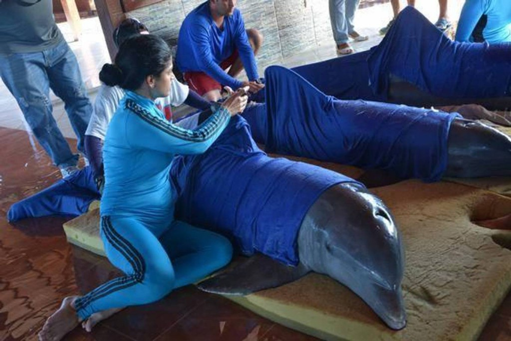 Photo: Live Science Cayo Guillermo prepare dolphins for evacuation ahead of Hurricane Irma.