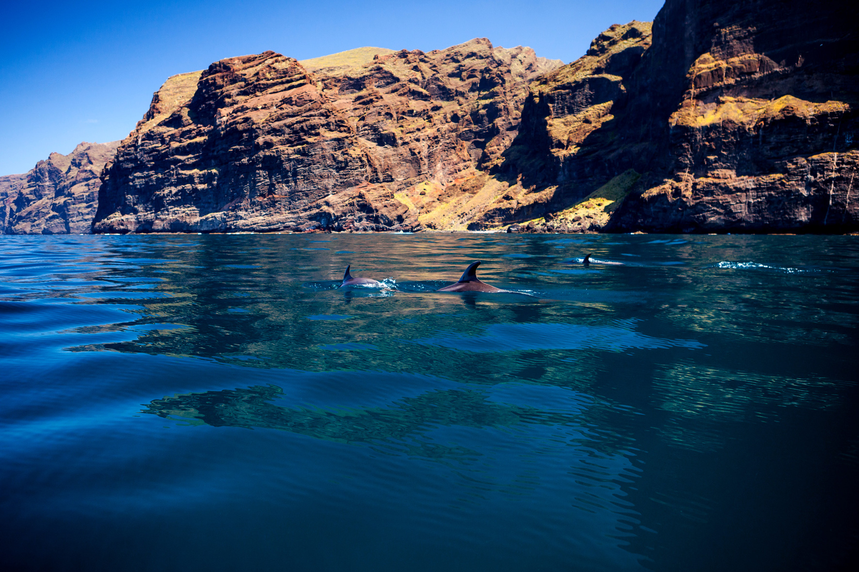 Photo: White Tenerife. Dolphins in Los Gigantes. Tenerife, Canary Islands, Spain.