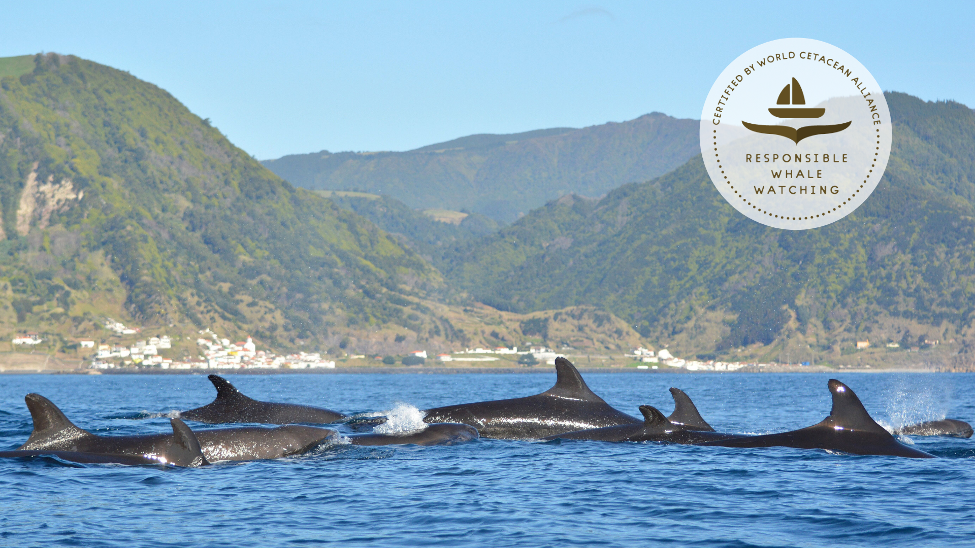 Watching Cetaceans? Get Certification!