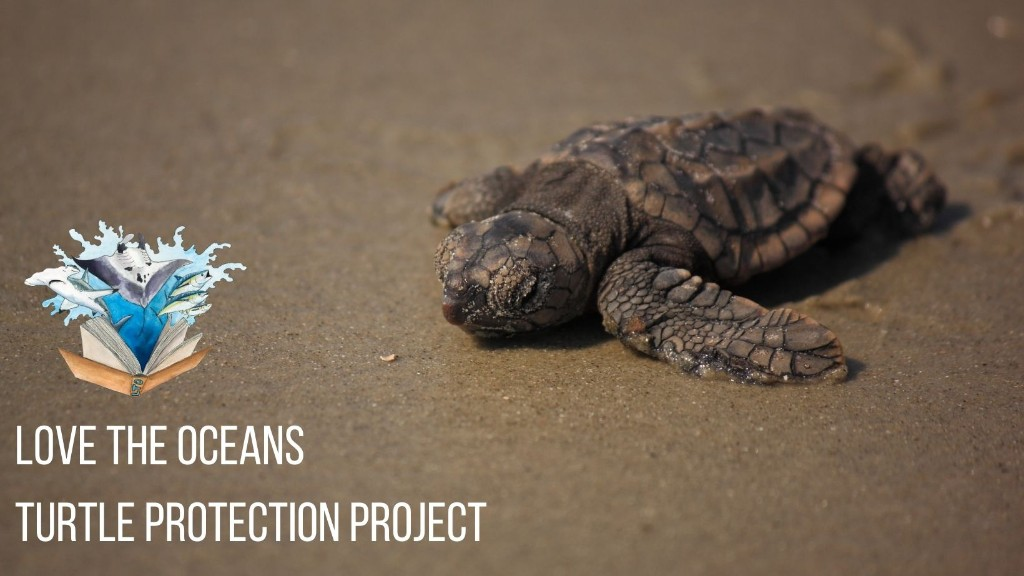 Love the Oceans shares new Turtle Protection Project